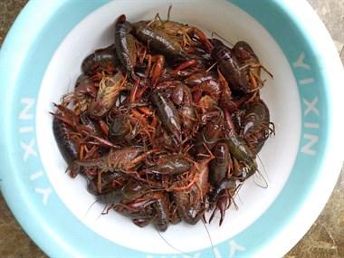 吃这美食的季节到了!新昌人刚买,中青才28元一斤!