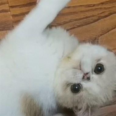 【转卖】加菲猫