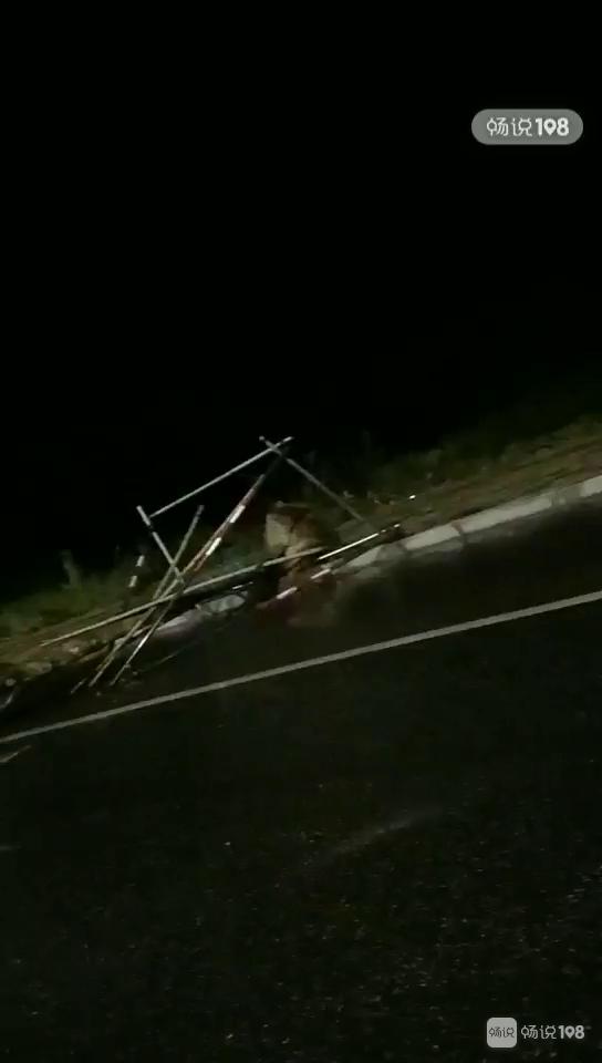 好多车子被砸!德清昨晚狂风暴雨还下冰雹,树都被连根拔起