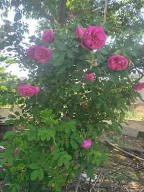 五一家里赏花