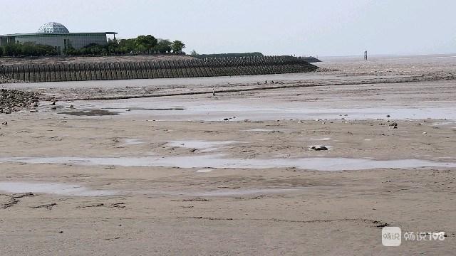 杭州湾有人被潮水冲走,被好心人救上来了!