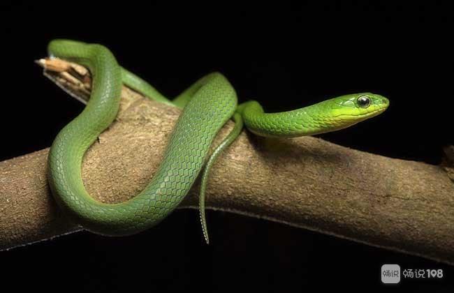 竹叶青还是青蛇?德清女子爬山遇蛇,误认成玩具结果…