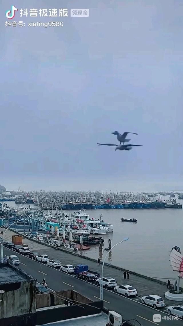 真的假的?网上热传沈家门渔港出现奇景,难得一见