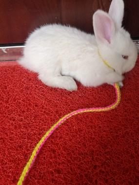好可爱的小白兔