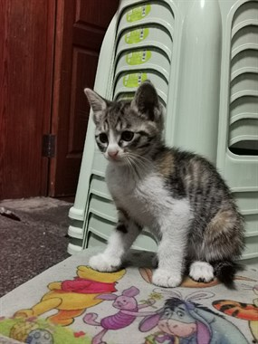 家里的母猫生了小猫,太多了找领养,身体健康的小猫