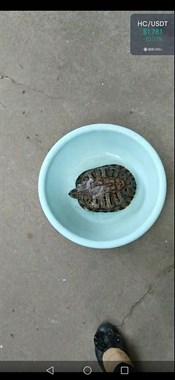 【转卖】乌龟