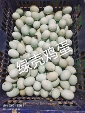 【转卖】出售  自家土鸡 绿壳鸡蛋   鸭蛋