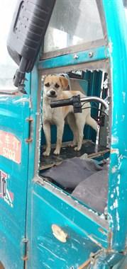 犬哥,你有驾驶证吗?