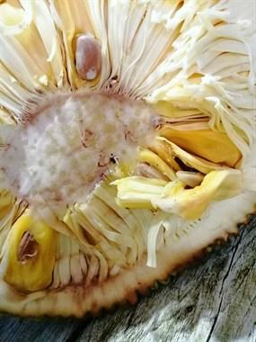 温岭人吃剩的菠萝蜜籽别扔掉,这样处理一下,营养价值高!