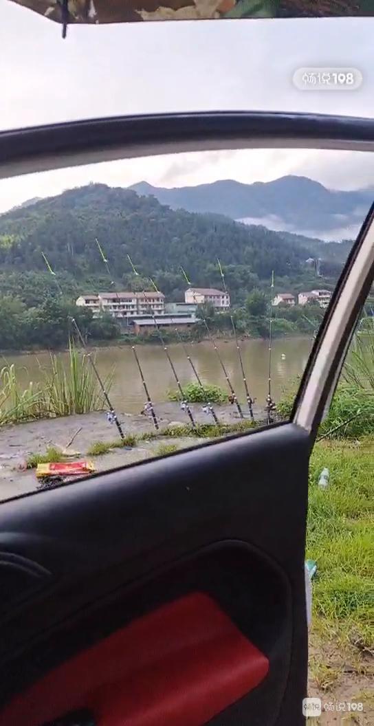 社友发现一个钓鱼好地方!一大早 岸边钓竿就摆满了!