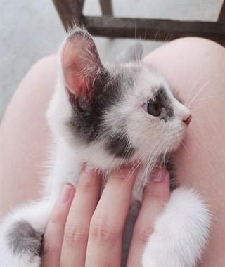为什么宁愿花钱买猫,也不愿意领养呢?