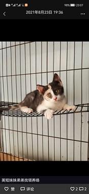 免费领养猫咪