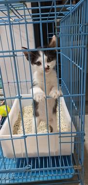 小奶猫找领养