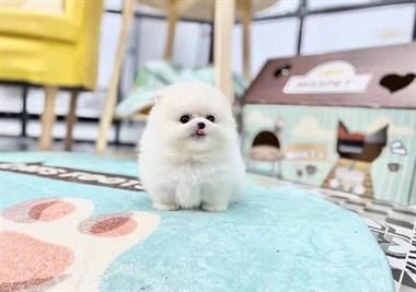 家养繁殖世界名犬名猫18758409955