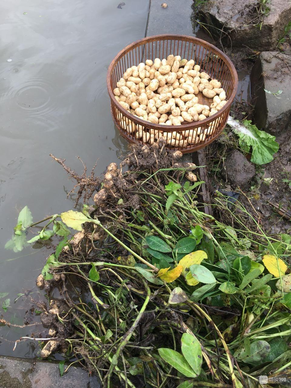舟山社友种菜遭遇重创!几块地都被虫啃食,汗水全白流!