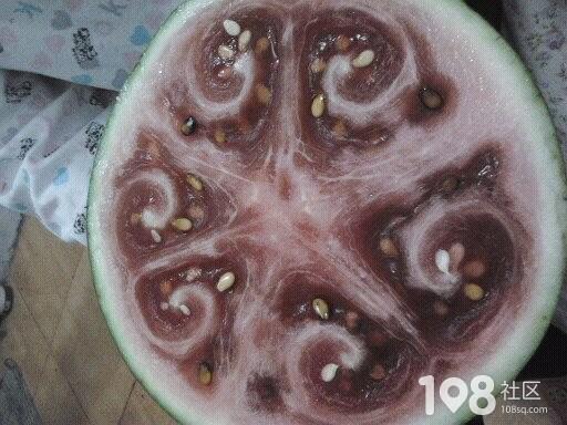 这样的西瓜能吃吗?老天,您让我情何以堪啊!!!!!!