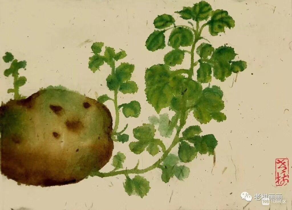 发芽的土豆能不能吃?