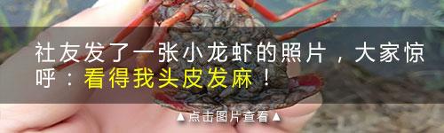 吃一回龙虾德清全家痛苦!原来这样吃里面全是虫子…