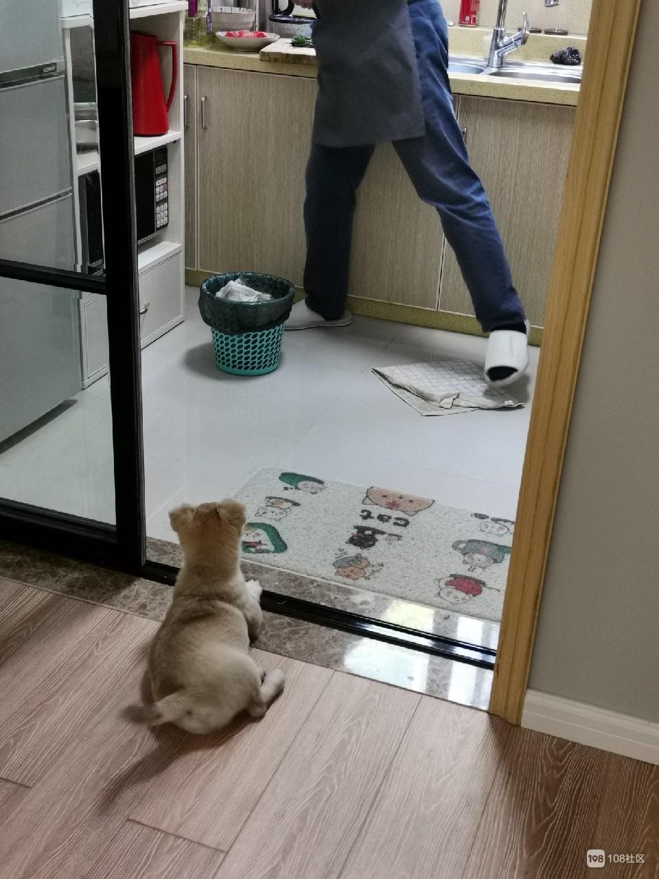 【转卖】3月龄小狗免费赠送领养
