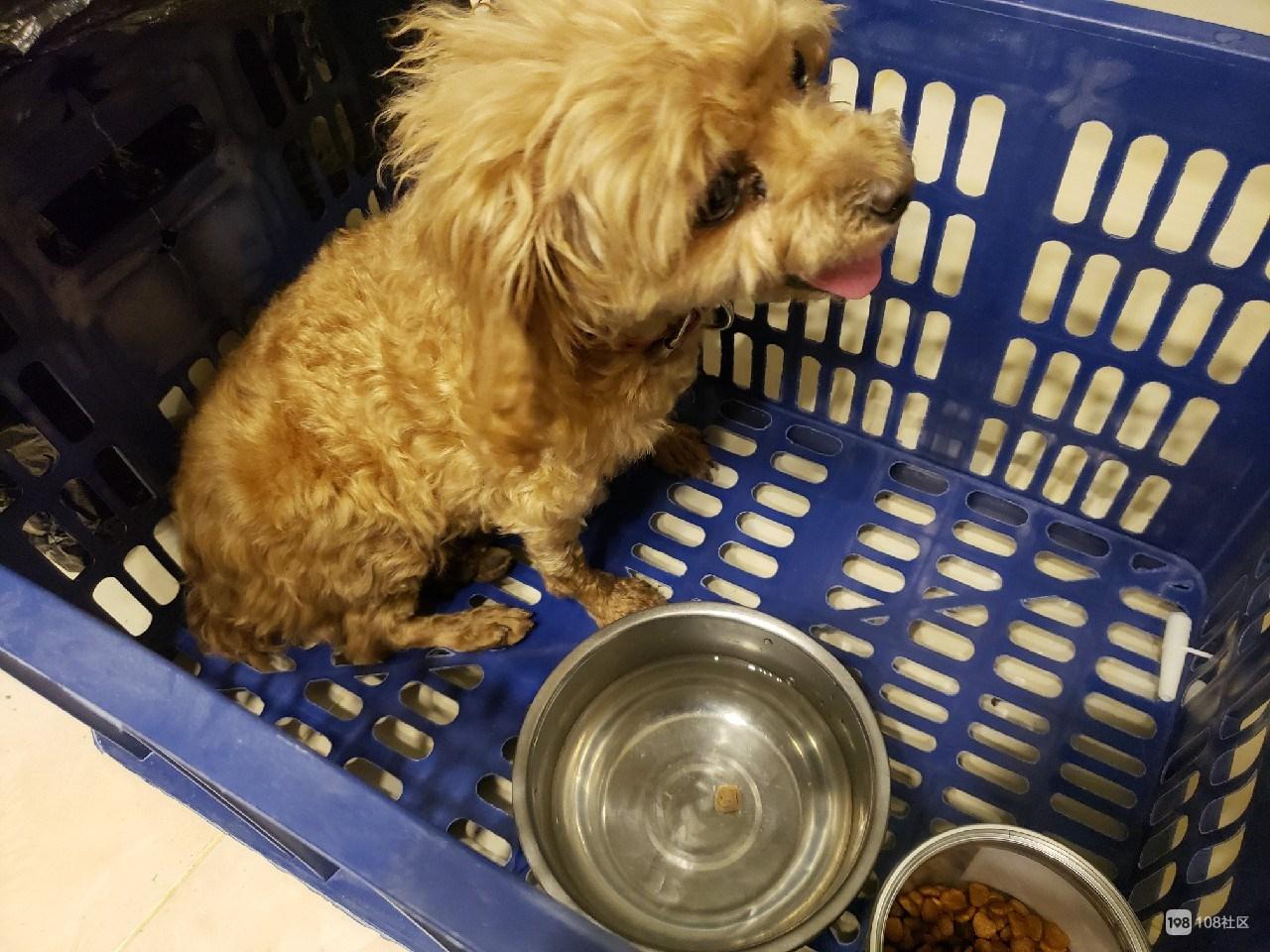 兴康南路菜场捡到一只小乖狗!眼泪汪汪,出草坪才拉粑粑