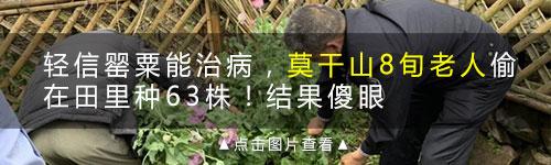 """新市一女子用罂粟壳粉做调料!家里种一片""""花海""""惊动警察"""