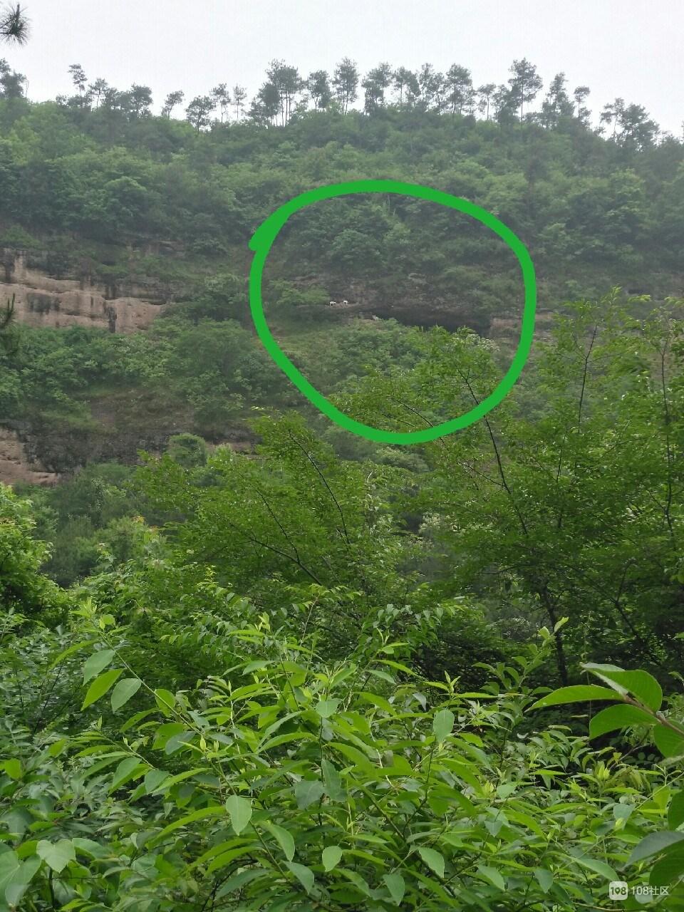 社友在悬崖峭壁上发现了不明生物!原来是馒头山的…