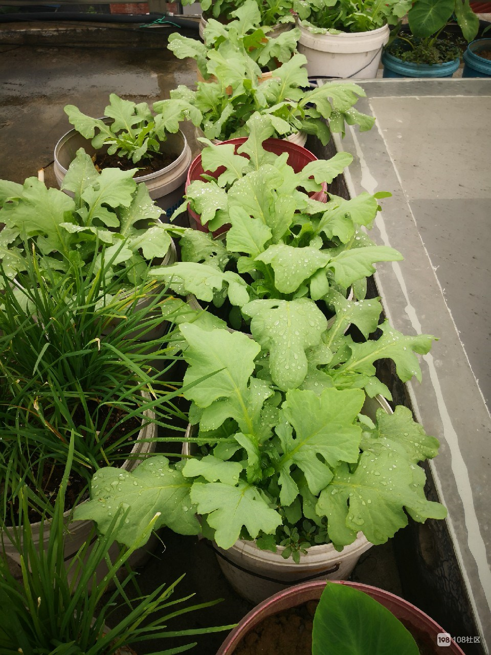 一年到头也不用买菜,平哥的菜园样样齐全