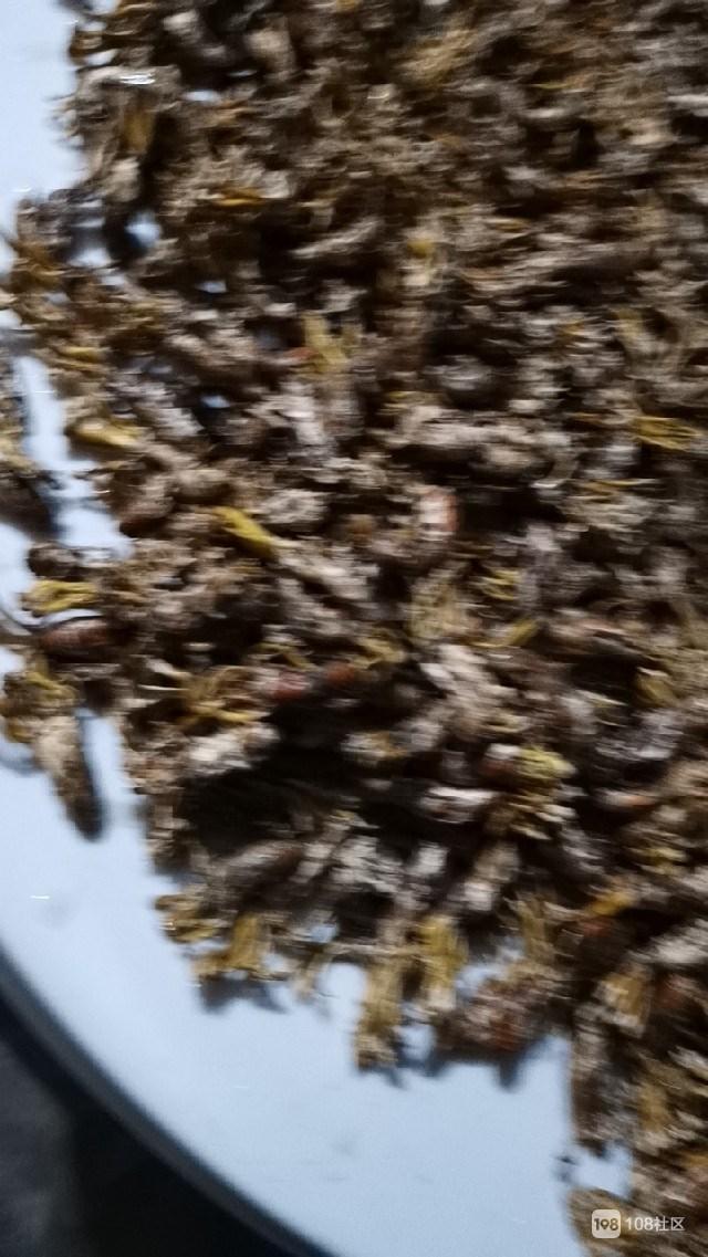 似蝉非蝉,这噶好的东西数百只,到底红烧还是用油炸