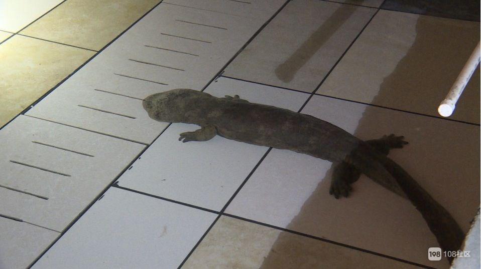 这珍贵动物被老板送上了嵊州囊的餐桌,足足2万尾!