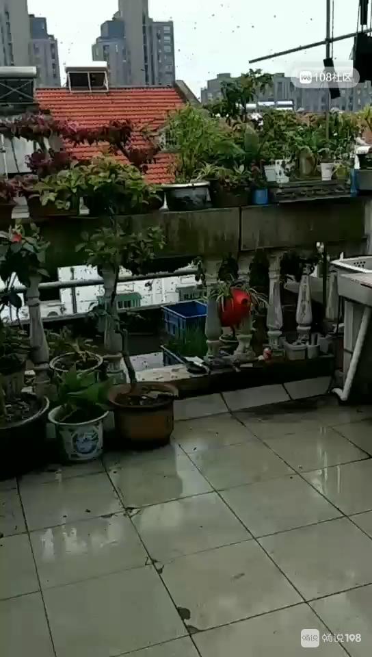 大批突袭德清!密密麻麻漫天狂飞,我家阳台遭这东西围攻